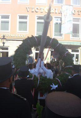 Mindener Marktplatz: Die Junggesellen-kompanie im Mindener Bürgerbataillon richtet den Maibaum auf